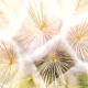 breath in dynamic mindfulness yoga